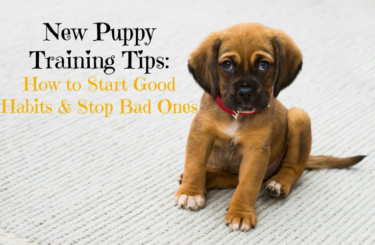How To Properly Train A New Pup Or Dog To Your Cat