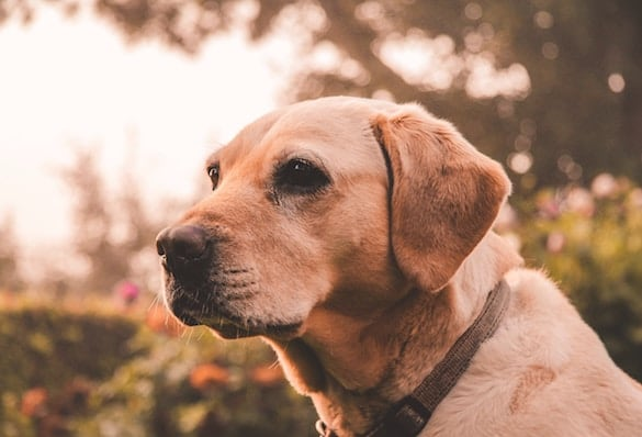 Caring For Any Mature Canine – Know About The Caring