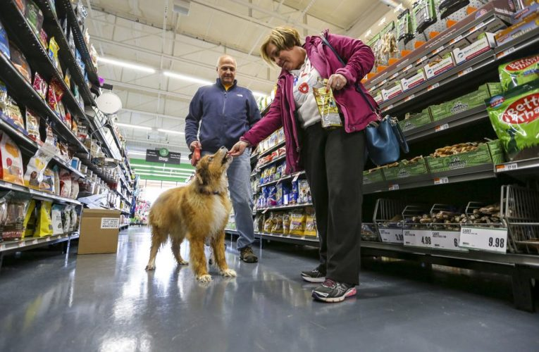 Organization Tips And Pet Care: Veterinary Medicines And Pet Supplies